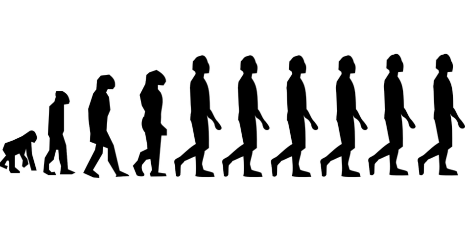 evolution-296584_960_720.png