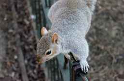 squirrel-111258_960_720