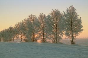 winter-1882723_960_720
