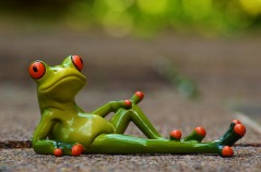 frog-947770_960_720.jpg